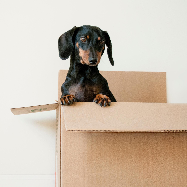 CADmep: Preparing to Move to Revit